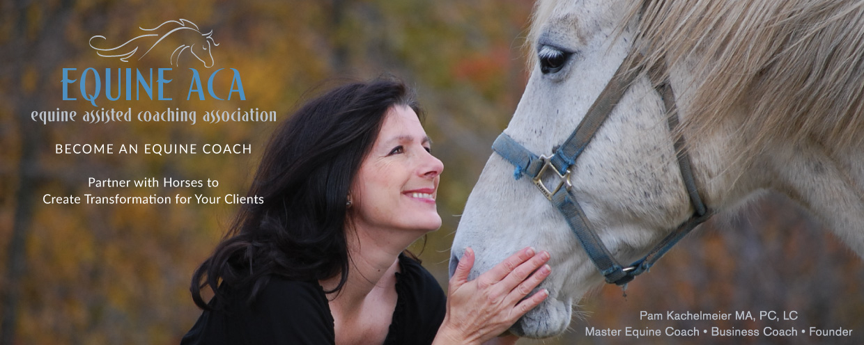 Equine Assisted Coaching Certification Training Program - Equine ...
